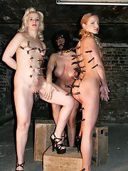 Filthy MILFs getting tortured by naughty femdoms in latex outfits
